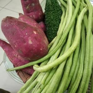 お野菜づくし