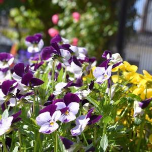 花盛りなお庭