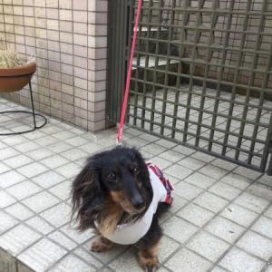 モモと桜・2019とモモコレ~NO5