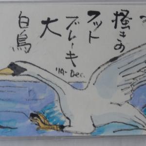 水掻きのフットブレーキ大白鳥