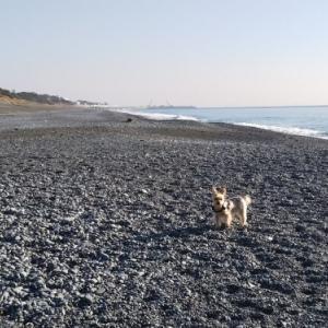 ■砂浜トレーニング復活■