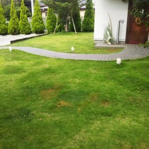 ■夏の芝刈りはつらいよ(-_-;)■