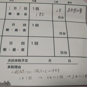 ■ハナの尿失禁(4)■