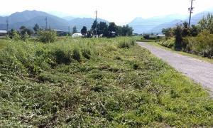 連日好天が続きますね。草の勢いもすごいです。今のうちに除草剤を。
