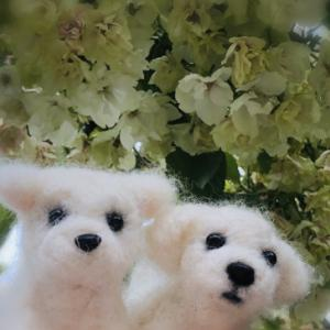 鬱金(うこん)桜と散策で癒しのひと時♪