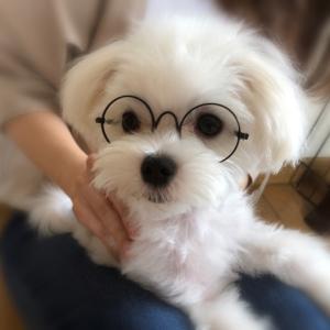 メガネも似合ってます♪