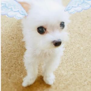 今日から天使4年生♪会いたい・・・