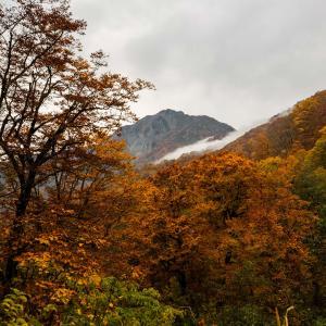 雨飾山 紅葉登山 大網コースから紅葉のブナ林を登る