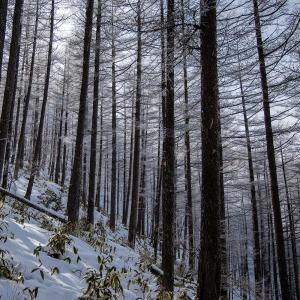 鉢伏山 霧氷で知られる冬山