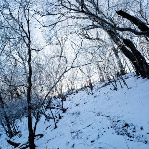 【熊注意】茂来山 皇太子陛下も登った縁結びの山