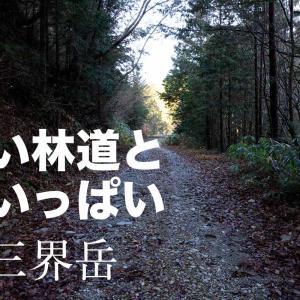 林道が長い沢だらけの奥三界岳