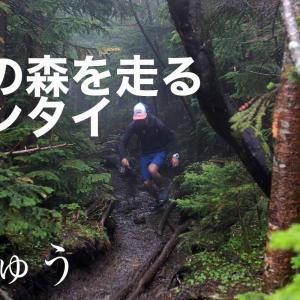 白駒池からにゅうへ周回する雨の森