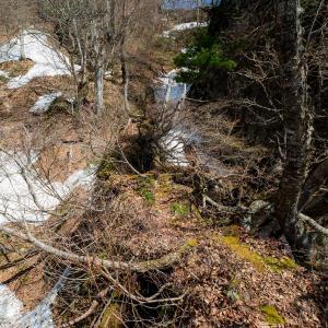 万仏山 イワウチワの咲く細尾根の登山道