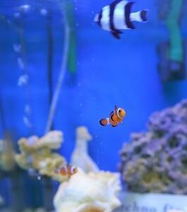 熱帯魚の世界