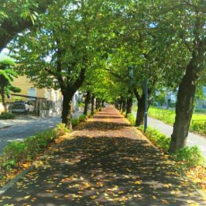 ベランダモーニングと秋めく散歩道♪
