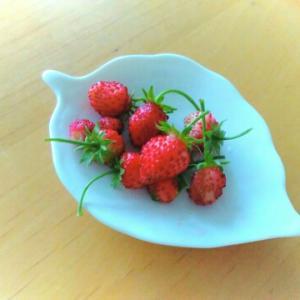 アカシア花峰蜜と1月のワイルドストロベリー