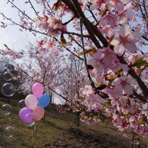 今日の空 ver.2017.03.19 早咲き桜(*^_^*)
