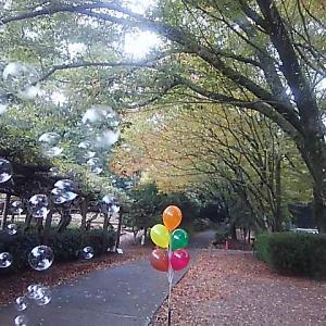 公渕公園 紅葉(*^_^*)