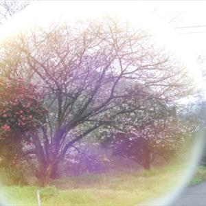 今日の空 ver.2017.04.07 桜満開前の雨・・・