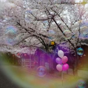 今日の空 ver.2017.04.08 桜満開に・・・