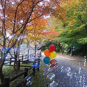 奥の湯公園の紅葉(*^_^*)