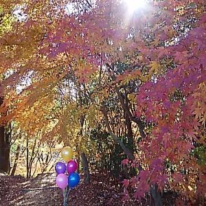 秋は続く・・・満濃池森林公園