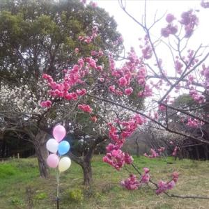 2月8日公渕公園・・・強風の中 強行・・・