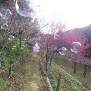 2月9日みろく公園 梅の花リベンジ(*^_^*)