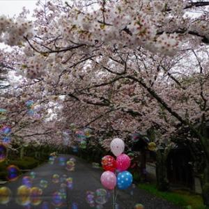 今日から新年度(*^_^*)