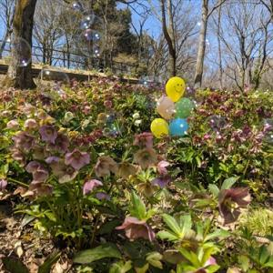 3月20日まんのう公園 竜頭の森