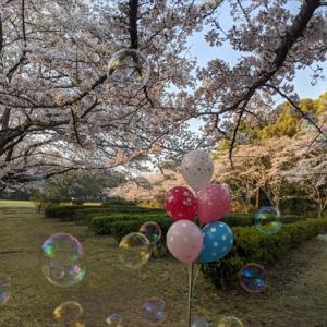 4月4日公渕公園(*^_^*)桜