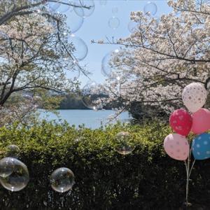 公渕池&桜(*^_^*)4月4日