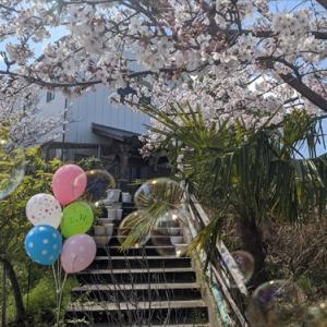 撮影の舞台に・・サヌキのピッピさん(*^_^*)4月5日