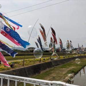 4月26日春日川の鯉のぼり