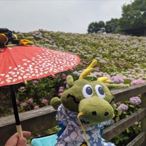傘持ちは・・自分・・ドラ夢くんと紫陽花散歩6月21日まんのう公園