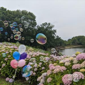 6月21日紫陽花(*^_^*)まんのう公園