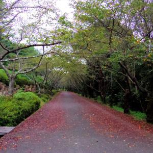 2015年9月5日 公渕公園 秋の桜通り・・・
