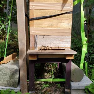 巣箱の土台を変更