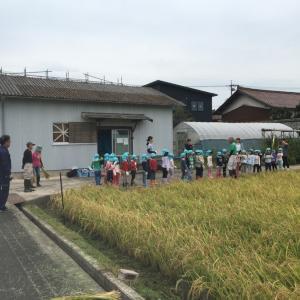 保育園児の稲刈り体験