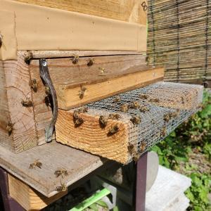 蜂さんの様子