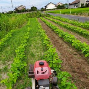大豆の除草