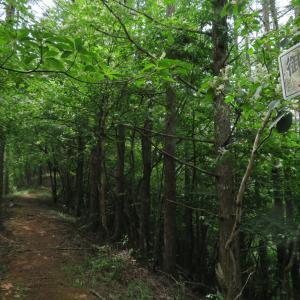 5ヶ月振りのリハビリは笠取山となぜか御座山・3:寝坊につき急きょ御座山へ