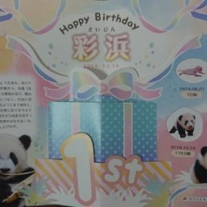 アドベンチャーワールド パンダ 赤ちゃん 彩浜 誕生日