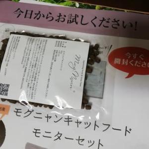 【10月もらったもの】モグニャン、スヌーピータオル、アマゾンギフト券1,800円、謝礼1,000円、ボトルコーヒー