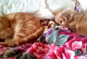 【10月第5週&11月第1週のハイ&ロー】猫がついにベッドへ!&歯列矯正しようか悩んでいる
