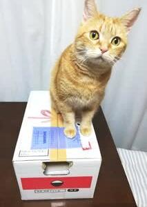 【ふるさと納税】佐賀県からお米が届いた