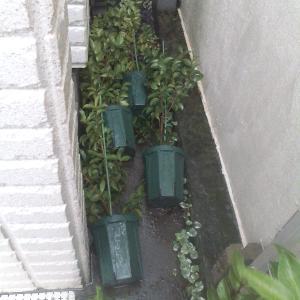強風で鉢が倒れる