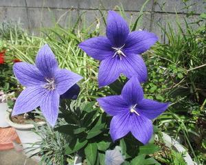 庭の花々です。ご覧ください。