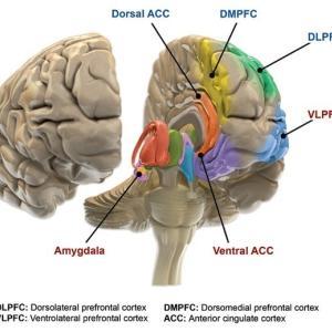 脳の姿・脳の働き