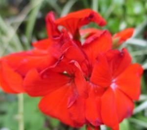 「庭の花々」続き